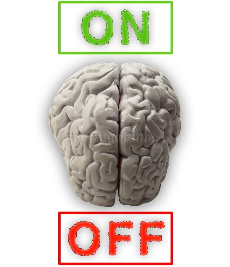 Gehirne vektor abbildung