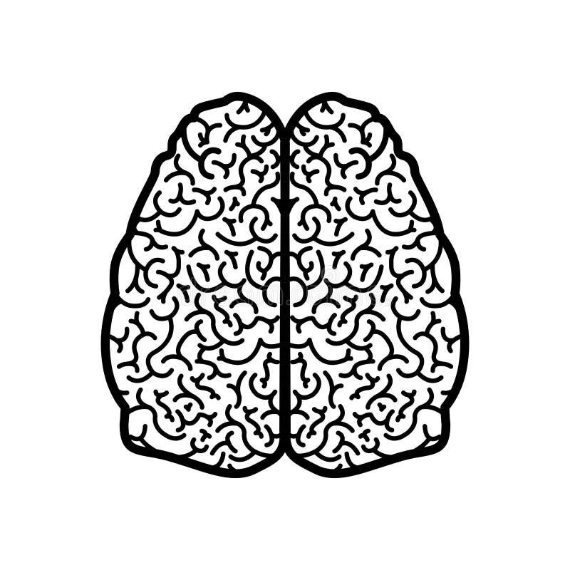 Gehirnschattenbildmonochrom Mit Zwei Zerebralen Hemisphären Vektor ...