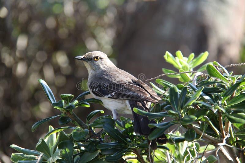 Gehockter Vogel stockfotografie