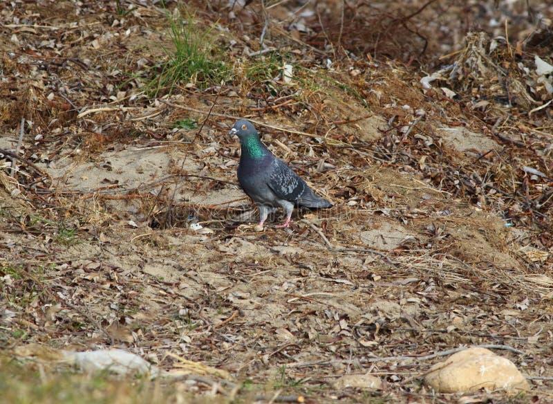 Gehouden van en gehaate vogel royalty-vrije stock afbeeldingen