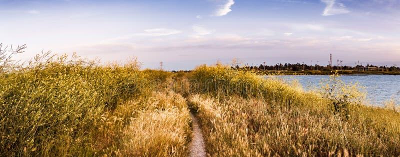 Gehweg ausgerichtet mit schwarzer Senf Kohl Nigra Wildflowers, Bereich San Jose, San Francisco Bay, Kalifornien lizenzfreie stockfotos