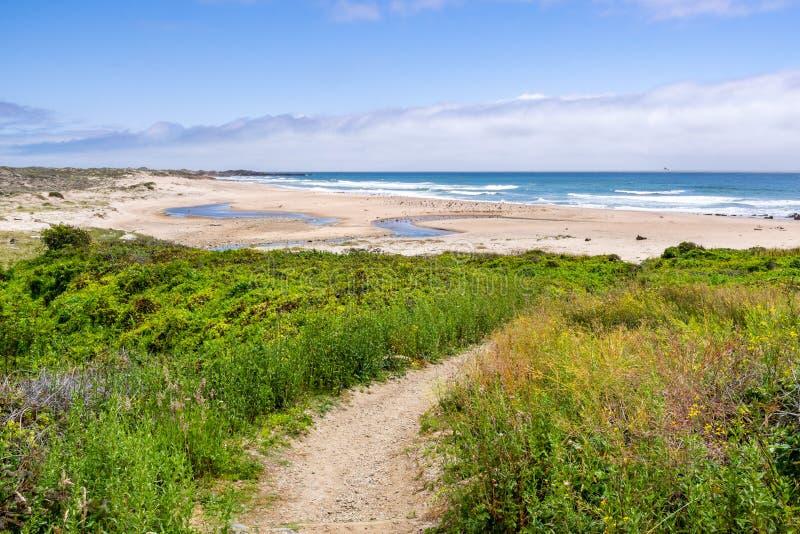 Gehweg, der grüne Sträuche in Richtung zu einem sandigen Strand durchläuft; Gazos-Nebenfluss Año Nuevo State Park, Küstenlinie de stockfoto