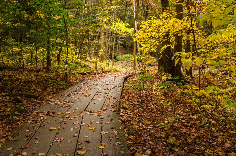 Gehweg durch das Holz im Herbst stockbild