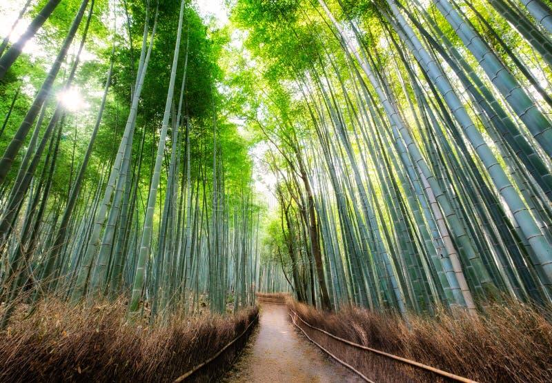 Gehweg im Bambuswald schattig mit Sonnenlicht bei Arashiyama stockbilder