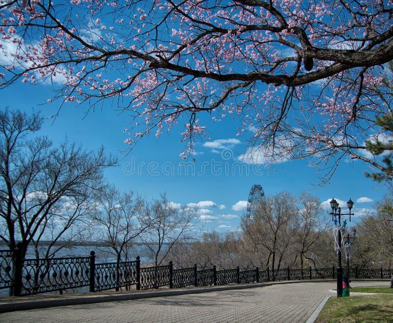 Gehweg im blühenden Stadtpark am sonnigen Frühlingstag Postkarte stockfotografie