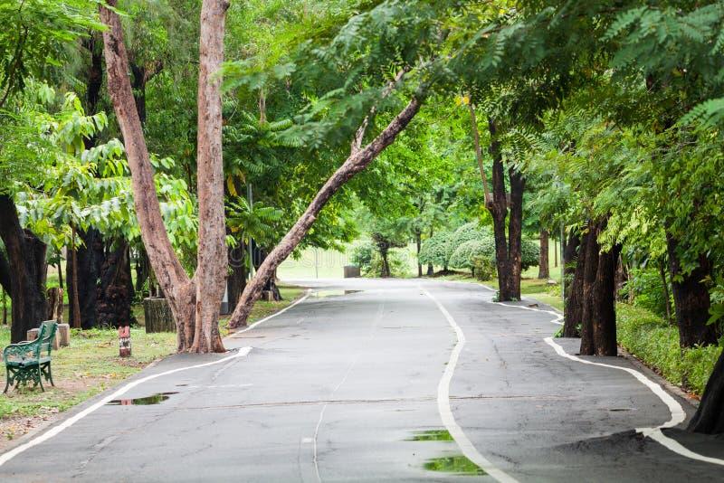 Gehweg im Park nach Regen stockfoto