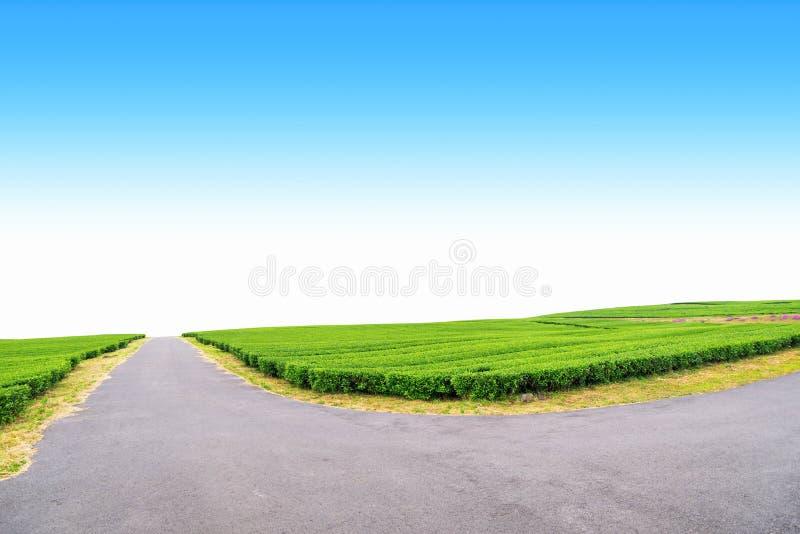 Gehweg im Teebauernhof lizenzfreie stockbilder