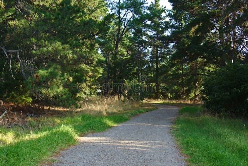 Gehweg mit grünem Gras und Bäume an den Seiten stockfotografie