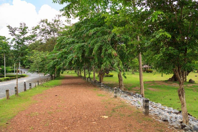 Gehweg in natürlicher Studie und in Umwelttourismus C Jedkod Pongkonsao stockfotos