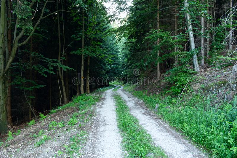 Gehweg-Weg-Weg mit gr?nen B?umen in Forest Beautiful Alley In Park Bahn-Weise durch dunklen Wald stockfoto