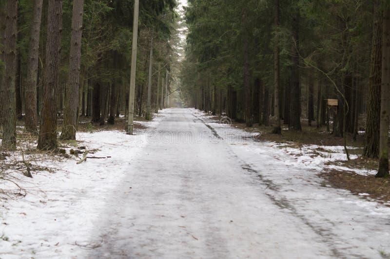 Gehwege im Kiefernwald lizenzfreies stockfoto