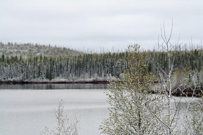 Geikierivier in Saskatchewan stock foto's