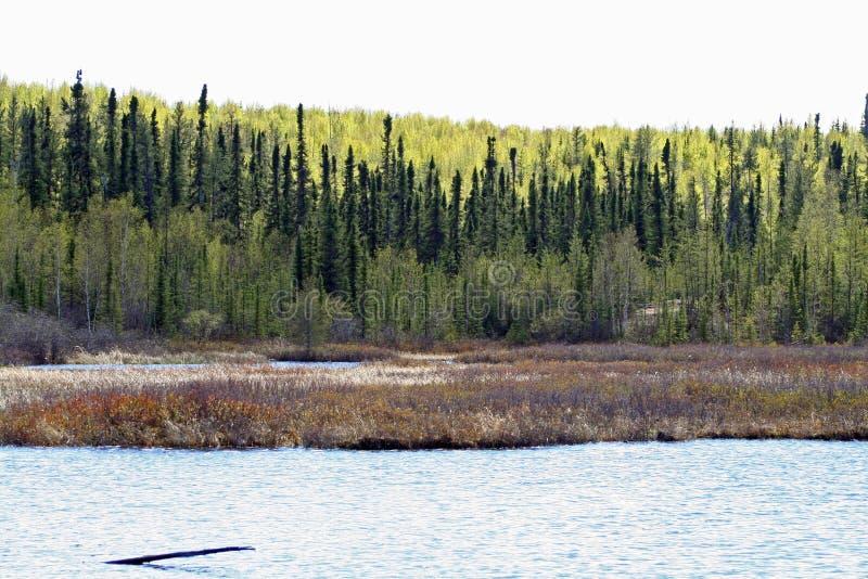 Geikierivier in Saskatchewan stock afbeelding