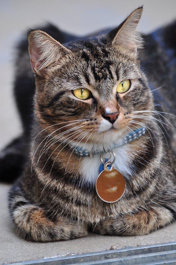 Geinteresseerde Kat royalty-vrije stock fotografie