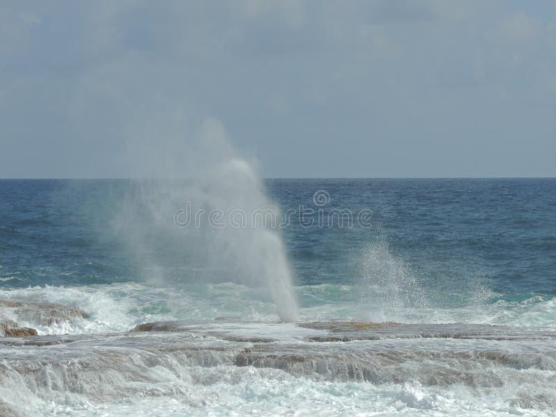 Geiser in Barbados stock afbeeldingen