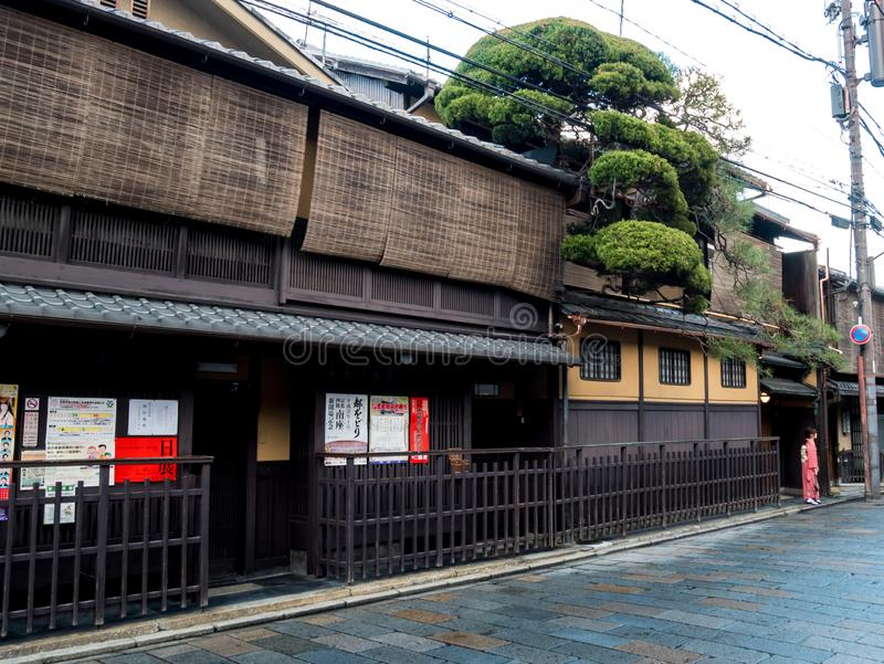 Geisha som poserar under ett härligt träd i en retro gata för japansk stil på Gion Ward arkivfoto
