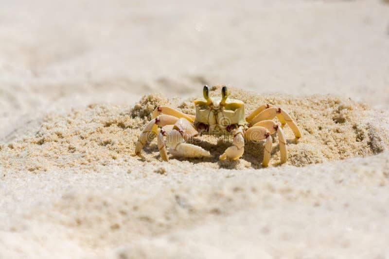 Geist-Krabbe, die neben Loch steht stockfotografie
