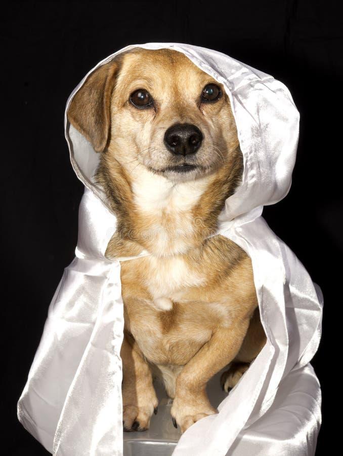 Geisthund stockfotografie