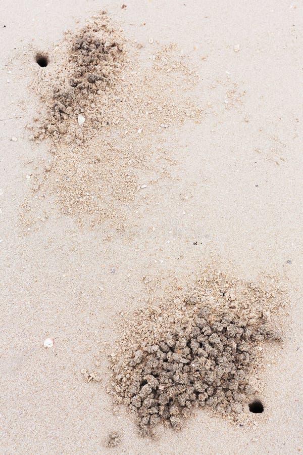 Geistkrabbenlöcher auf dem Strand stockfotos