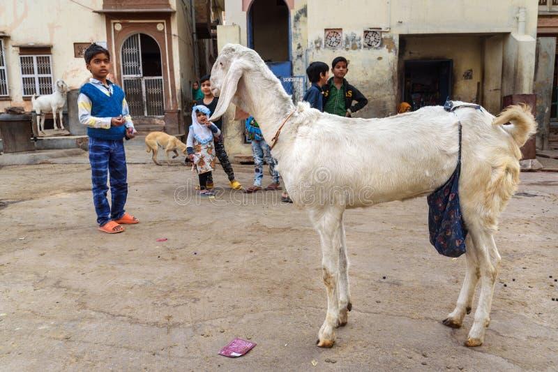 Geit op de straat in Bikaner Rajasthan India royalty-vrije stock fotografie