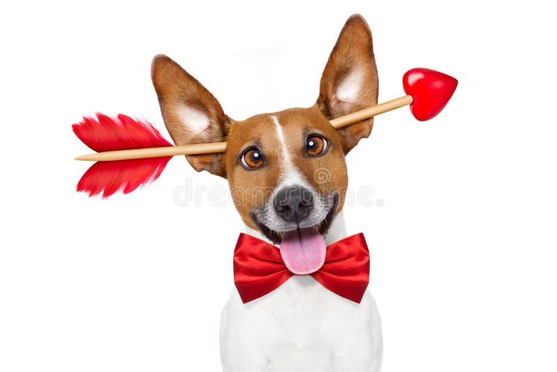Gek bij de hond van liefdevalentijnskaarten royalty-vrije stock foto