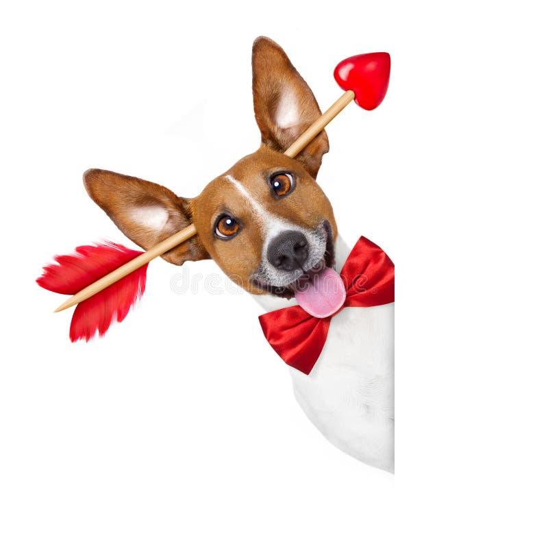Gek bij de hond van liefdevalentijnskaarten royalty-vrije stock afbeelding