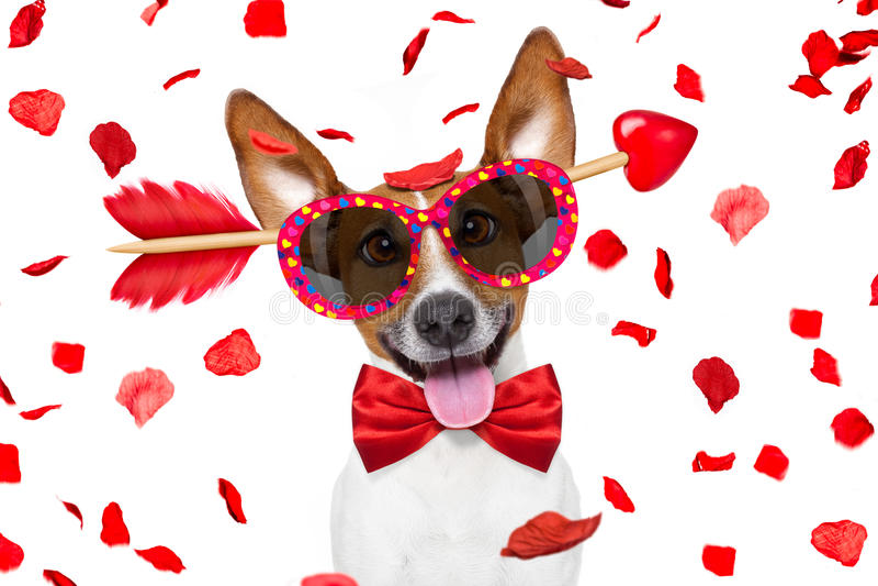 Gek bij de hond van liefdevalentijnskaarten stock afbeelding