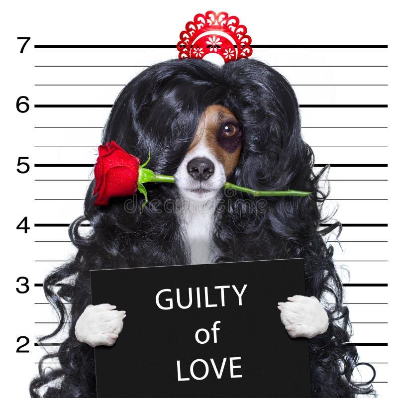 Gek bij de hond van liefdevalentijnskaarten mugshot royalty-vrije stock foto's