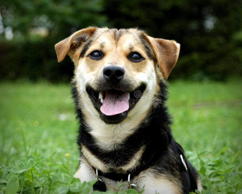 Gek en mal puppy royalty-vrije stock afbeeldingen