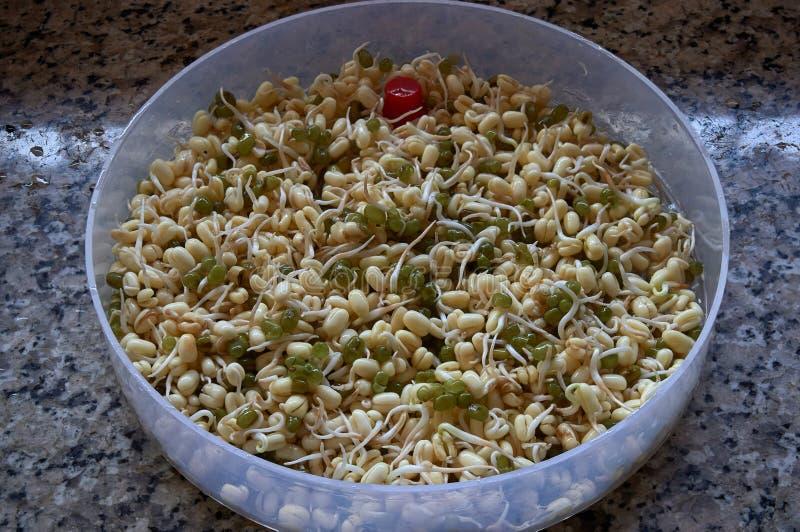 Gekeimte Mungobohnen soked in Wasser Kalyan-Maharashtra stockbild