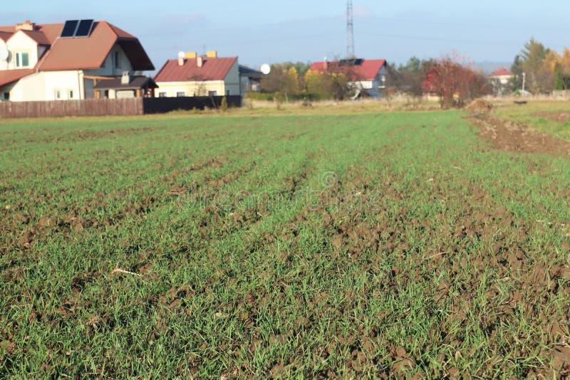 Gekeimtes Feld der Winterfrüchte im Frühjahr im Dorf Grüne Getreidesprösslinge, die auf gepflogenem Boden keimen Neue Ernte des W lizenzfreie stockfotos