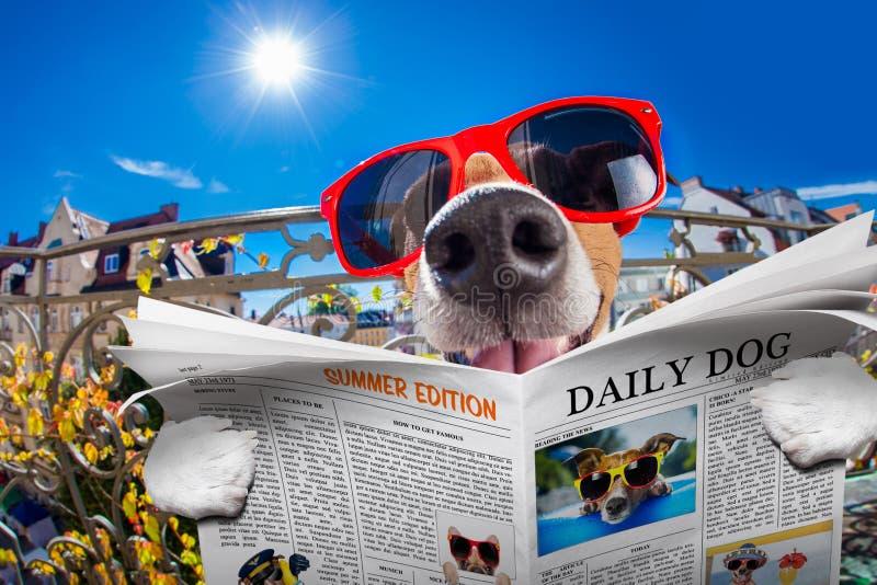 Gekke dwaze stomme hond fisheye blik royalty-vrije stock foto's