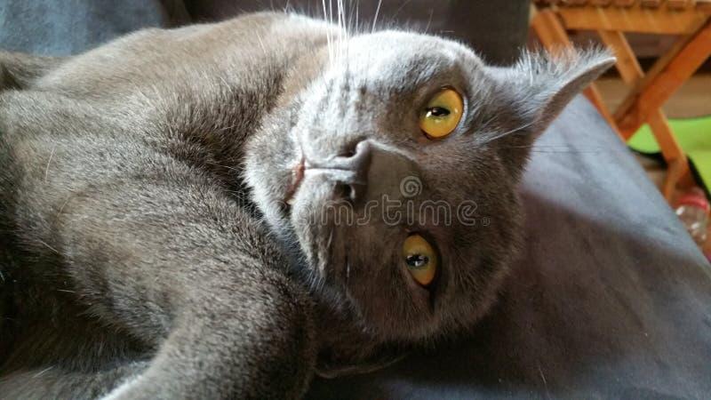 Gekke kat die gek materiaal doen royalty-vrije stock foto