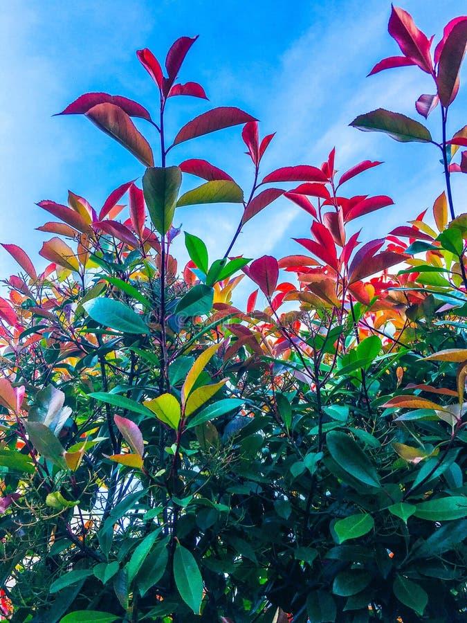 Gekke kleuren van aard stock foto