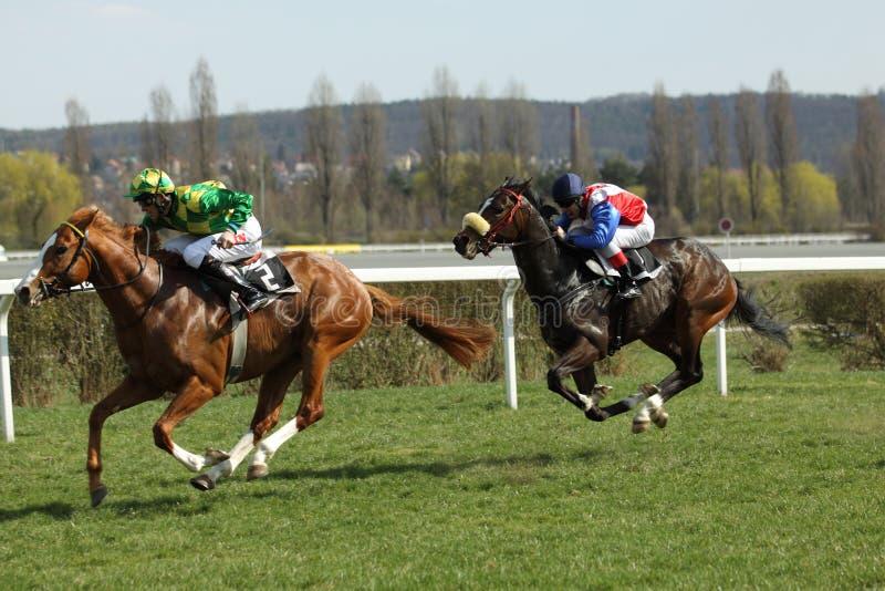 Gekke wortel in paardenrennen in Praag royalty-vrije stock afbeelding