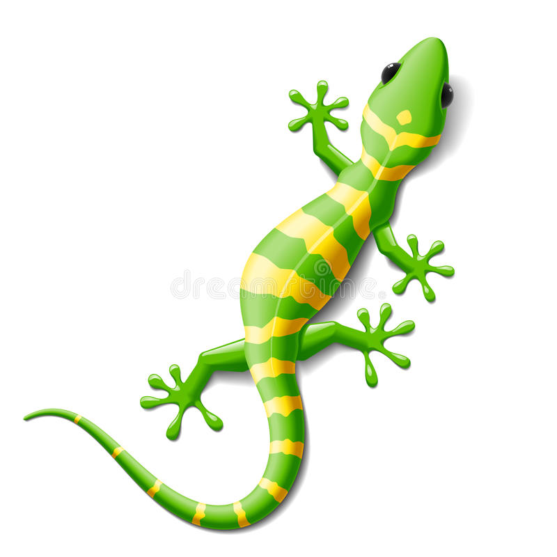Gekko vector illustratie