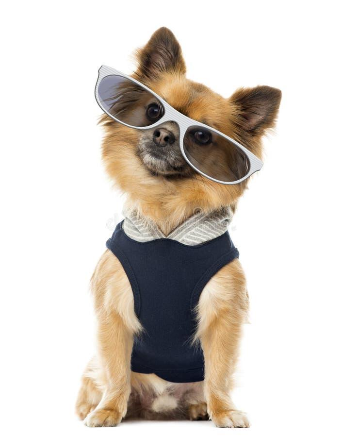Geklede omhoog Chihuahua-zitting en het dragen van glazen royalty-vrije stock afbeelding