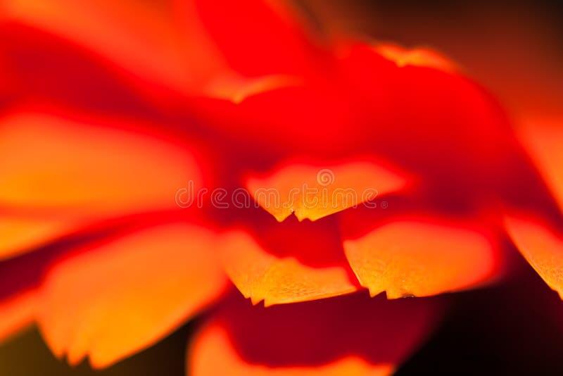 Gekleurd blured bloemblaadjes van de bloemclose-up zoals een heldere flits stock fotografie