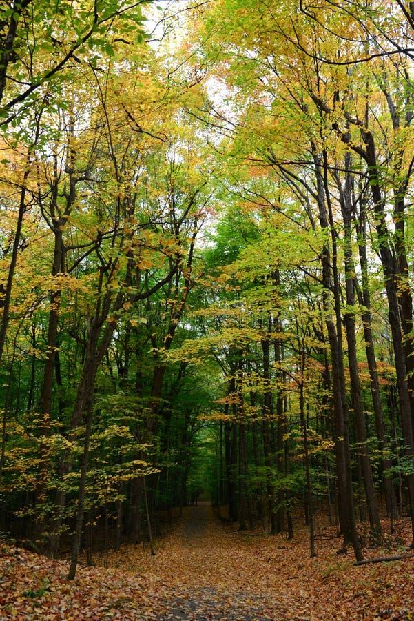 Gekleurd de herfstbos, vóór de koude stock foto's