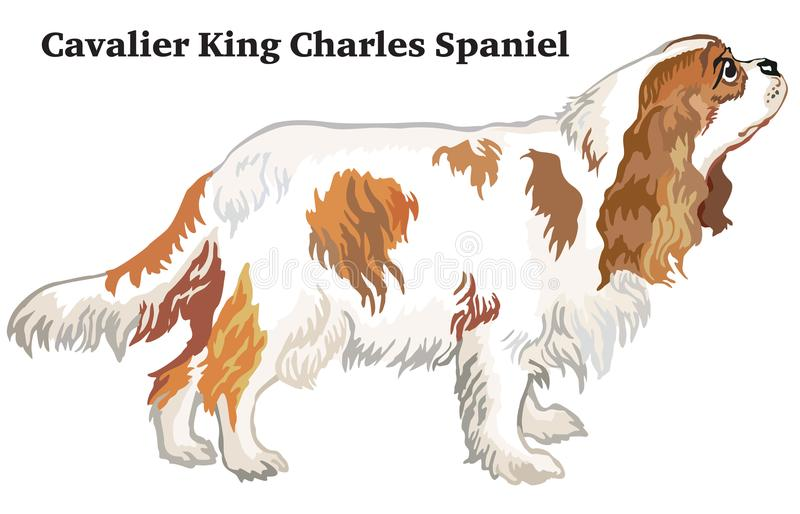 Gekleurd decoratief bevindend portret van hond Arrogante Koning Charle royalty-vrije illustratie