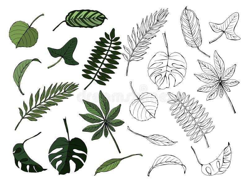 Gekleurd die en zwart-wit reeks verschillende bladeren, op witte achtergrond, hand-drawn vector wordt geïsoleerd vector illustratie