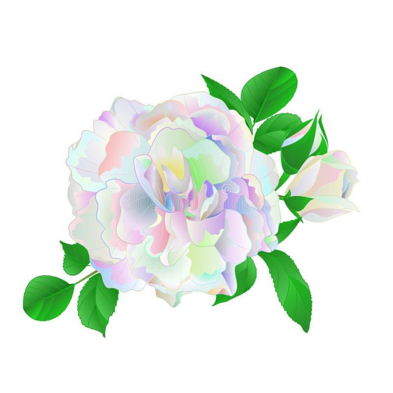 Gekleurd multi nam en knoppen en bladeren op een witte uitstekende vector botanische editable illustratie als achtergrond toe royalty-vrije illustratie