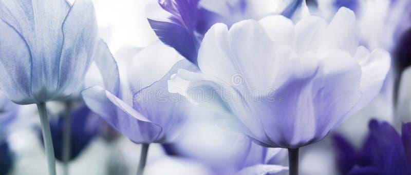 Gekleurd tulpenconcept royalty-vrije stock foto