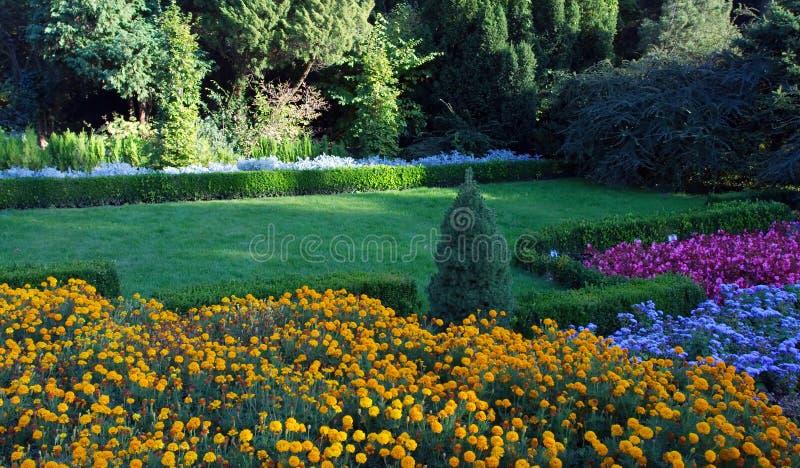 Gekleurde bloemen royalty-vrije stock fotografie