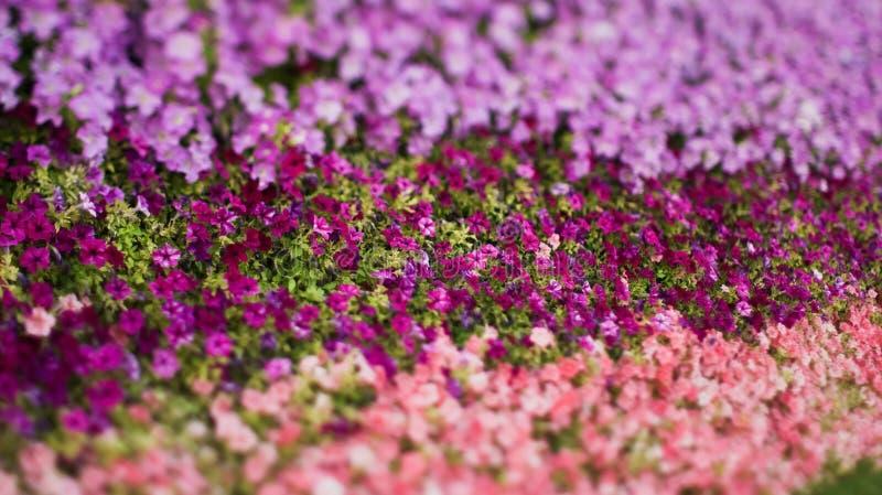 Gekleurde bloemen in park stock afbeelding