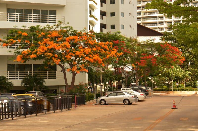 Gekleurde bomen royalty-vrije stock foto
