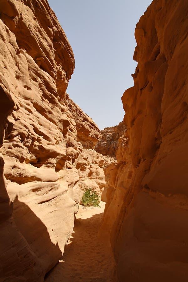 Gekleurde Canion, Sinai stock fotografie
