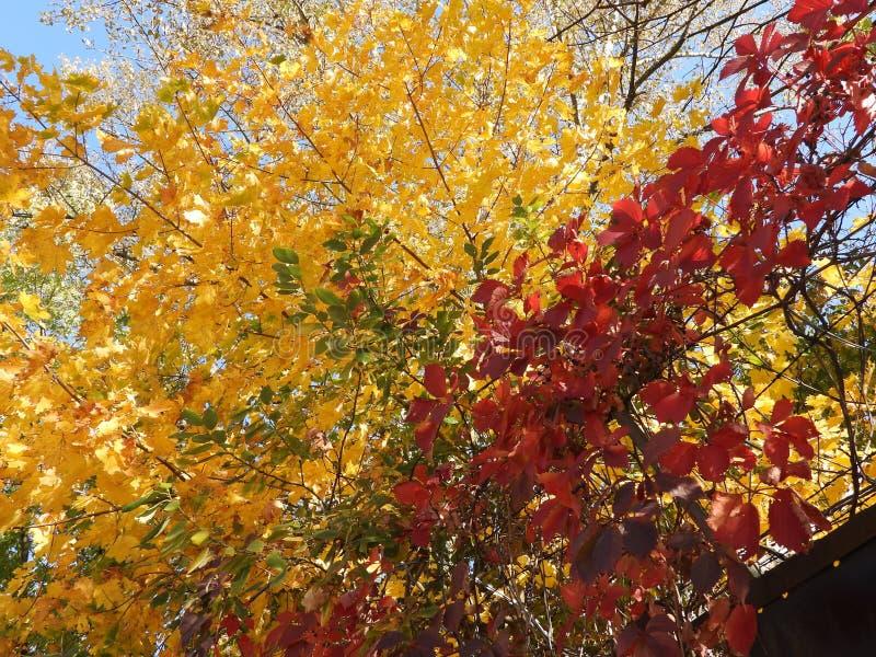 Gekleurde chaos 2 stock afbeelding