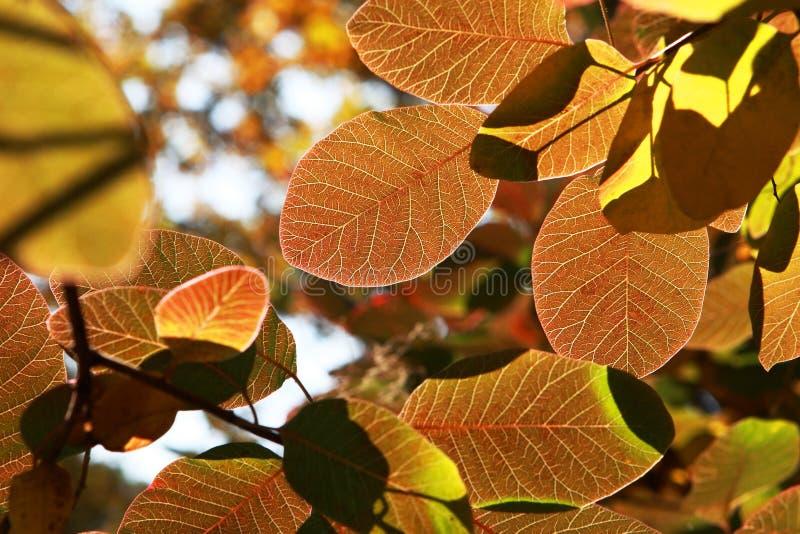 Gekleurde de herfstbladeren stock afbeeldingen