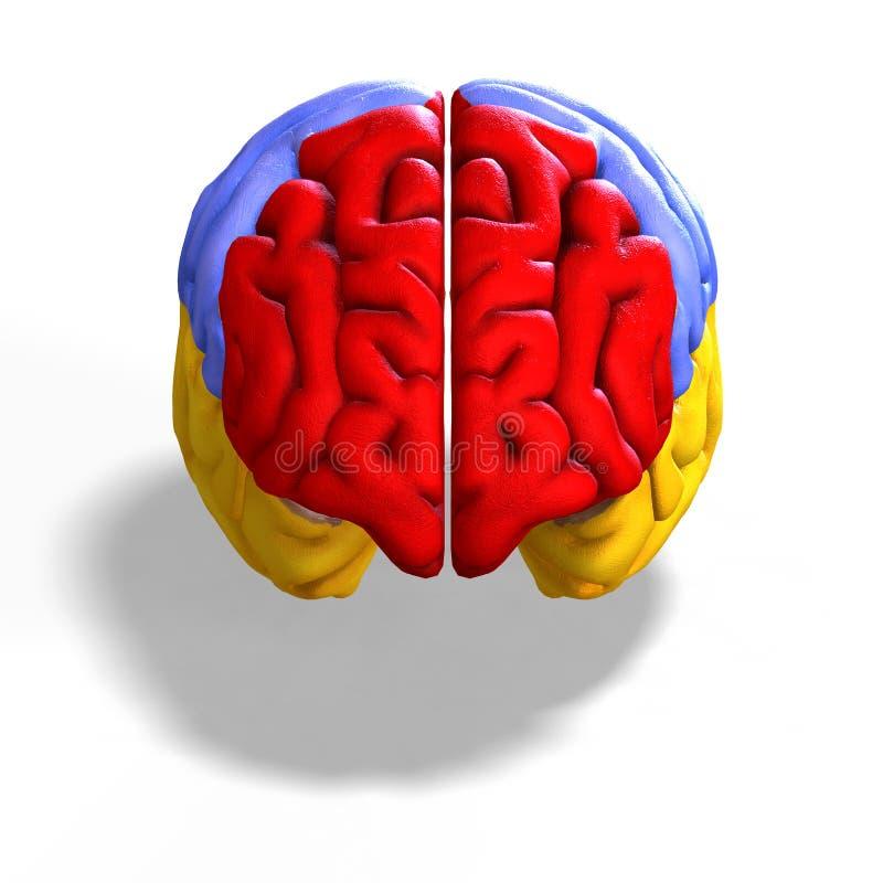 Gekleurde hersenen royalty-vrije illustratie